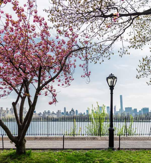Central Park - 2